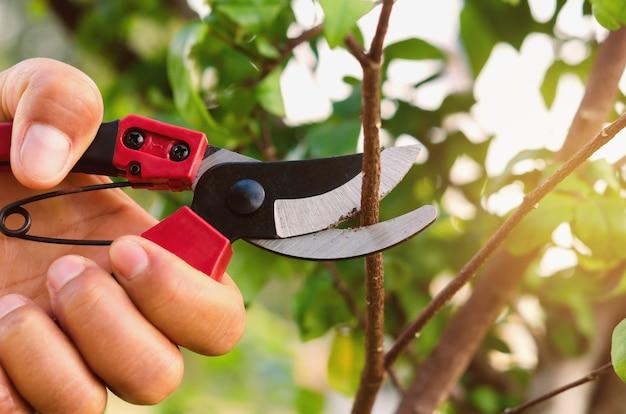 Ручное обрезка дерева и обрезка в саду