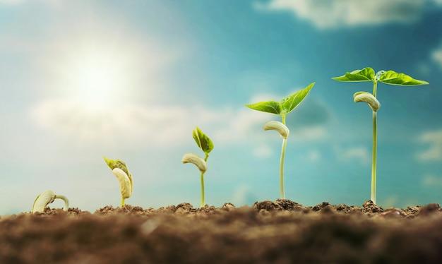 青空と日差しの成長の芽を育てる概念農業植え付け
