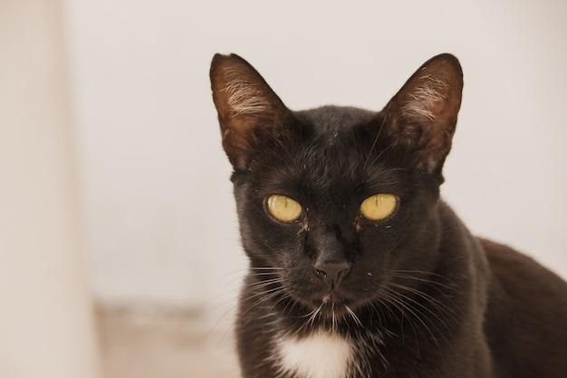 黒い猫探している地面に横になっています。