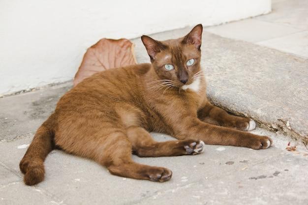 床の上の茶色の猫の目が見ています