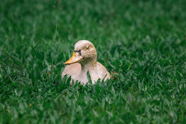 芝生の上の黄色いアヒルの像