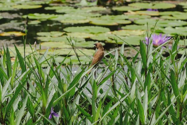 植物園のネヌファーと小鳥