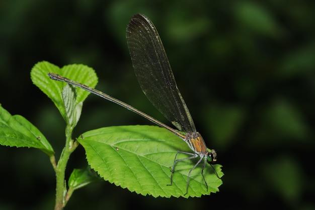 Зеленая стрекоза на листьях в естественном лесу