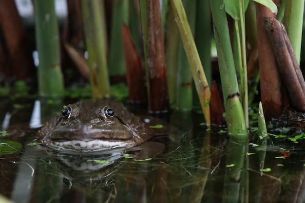 カエルの水
