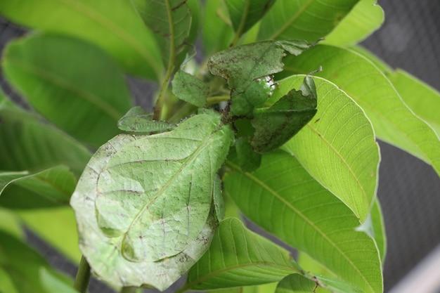 葉の昆虫動物の緑色を保持している自然の葉の背景