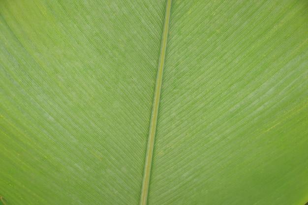 緑の葉の線