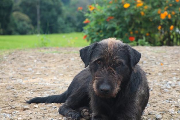 悲しみ犬の汚い水を食べる食べ物や誰かが彼らに愛を与え、目を見ている