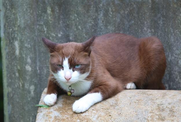 Симпатичная коричневая кошка и голубые глаза отдыхают на цементной трубе