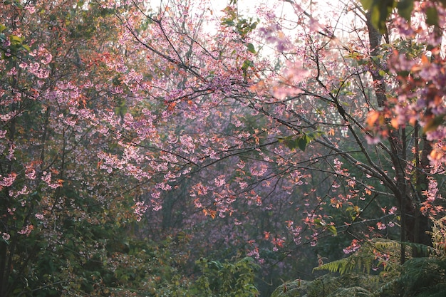 Гималайские цветы красивые красочные с мягким светом в утреннее время