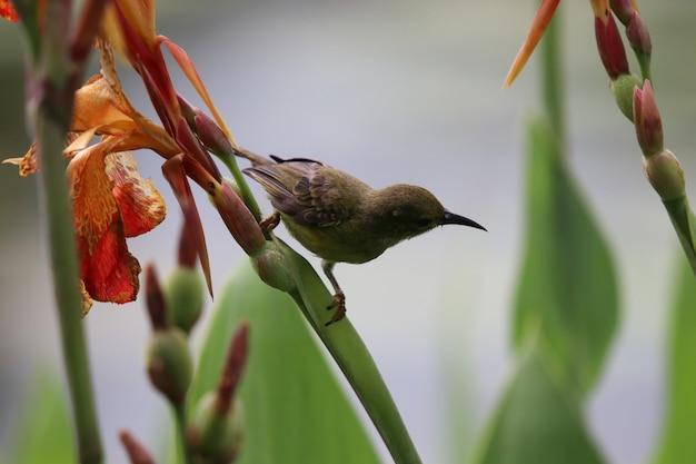 花のオレンジカンナの花は木の枝を保持する鳥と美しい色