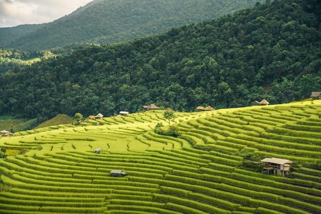 Террасное рисовое поле в чиангмае, таиланд, пабонгпян