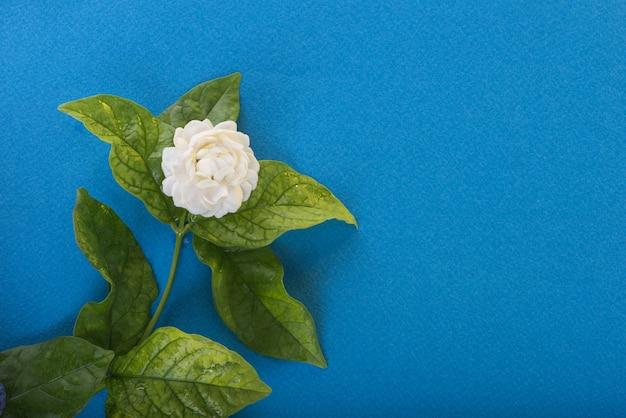タイの母の日のジャスミンの花のシンボル