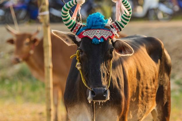 牛は式典に出席するために彼を美しい作品で飾った。