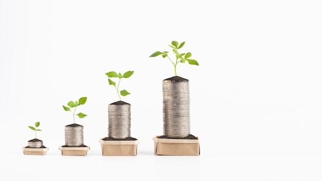 肥沃な土壌で紙箱にコインの山で成長している若い植物