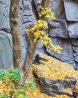 石の壁の背景にツリー