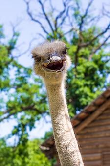 Голова страуса на фоне деревьев