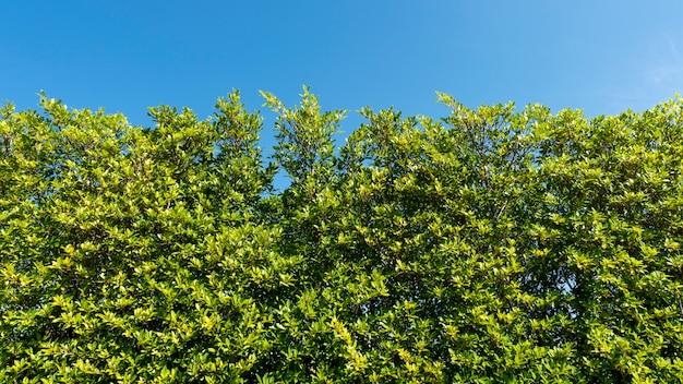 Ветви деревьев обрамляют красивые зеленые листья на фоне ясного голубого неба.