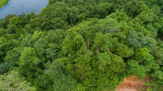 熱帯雨林の空撮