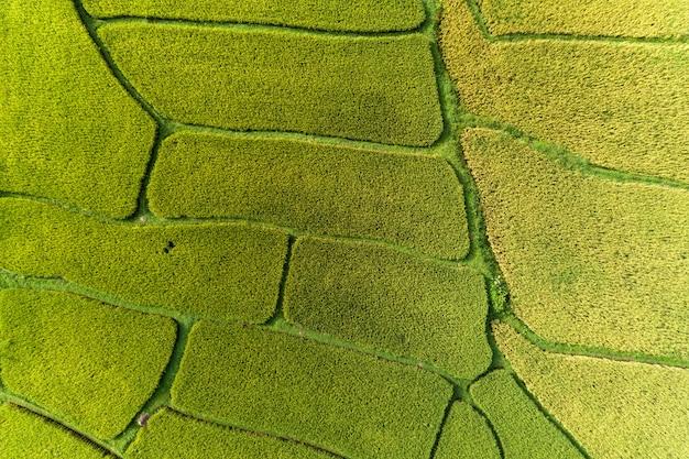 Аэрофотосъемка дронов сверху зеленые и золотые рисовые поля с прекрасным светом природы по утрам