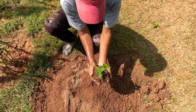 Деревья, растущие на почве в руке с сухой почвой экология концепции