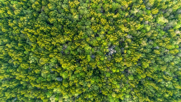 Естественные зеленые предпосылка или текстура верхних вниз лесных деревьев мангровы камеры трутня в таиланде.