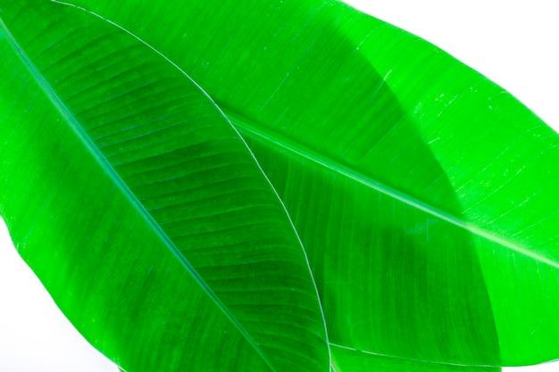 背景とデザインのバナナの葉のパターン