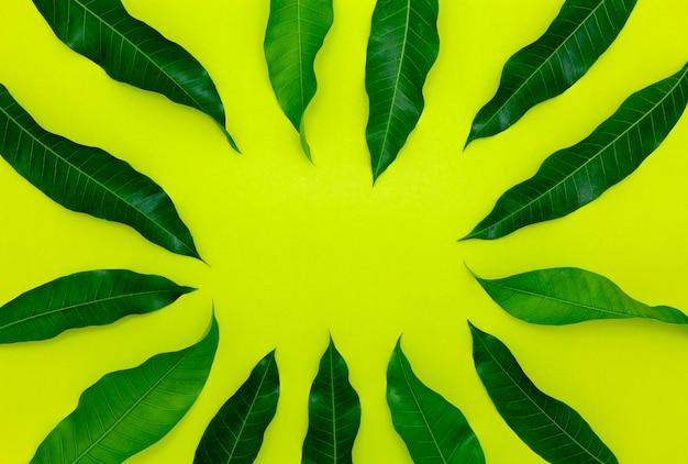 カラフルな紙の背景にマンゴーの葉
