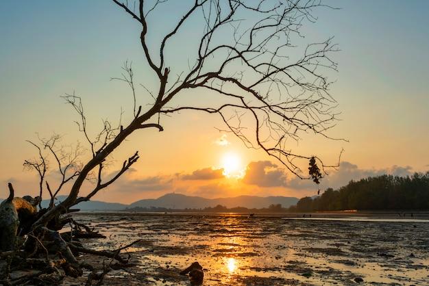 熱帯の海の夕日や日の出の夜の時間で枯れ木
