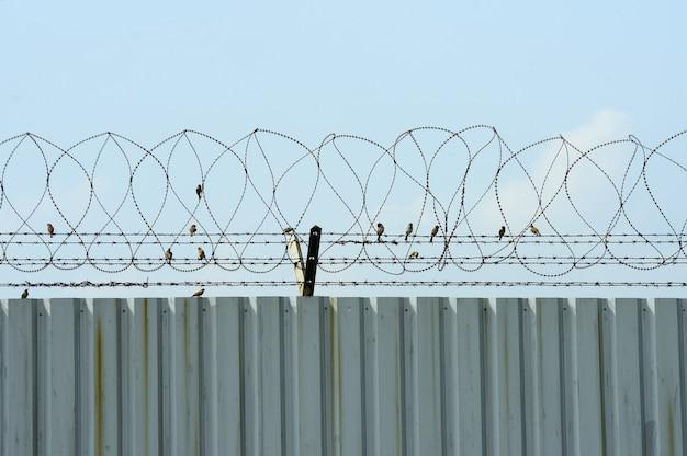 亜鉛メッキ鋼フェンスと有刺鉄線と小さな鳥