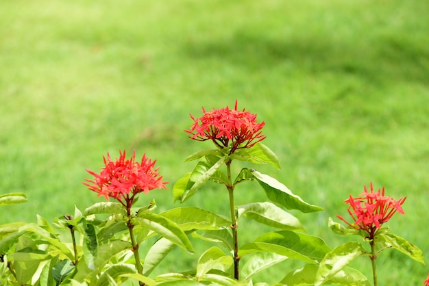 庭師は公園で花に水をまきます