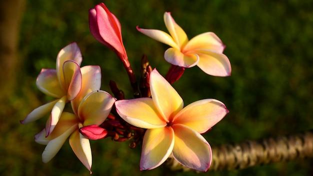 白い花。黄色い花または白い花