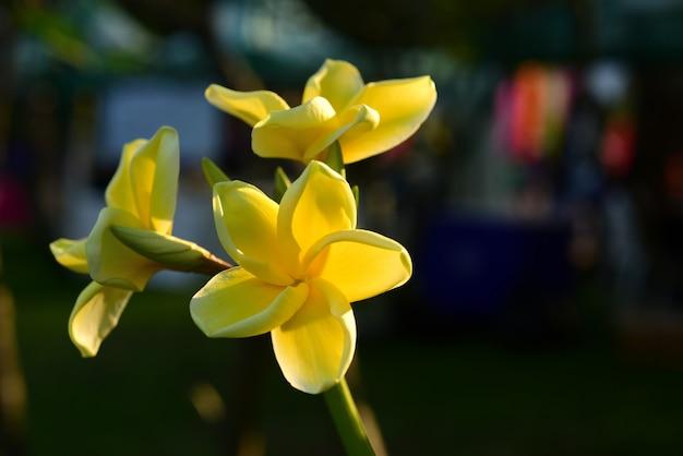 庭の美しい花