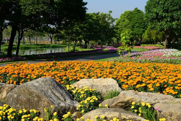 。美しい庭園。美しい庭。