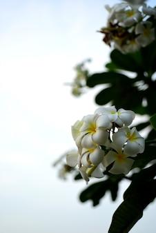 庭の美しい花夏に咲いています。