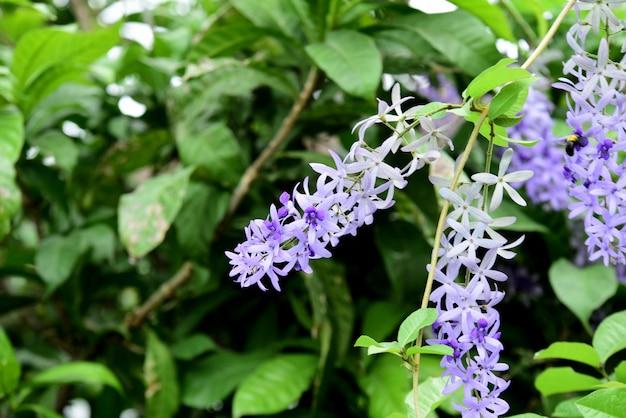 庭の色とりどりの花。庭の美しい花夏に咲く