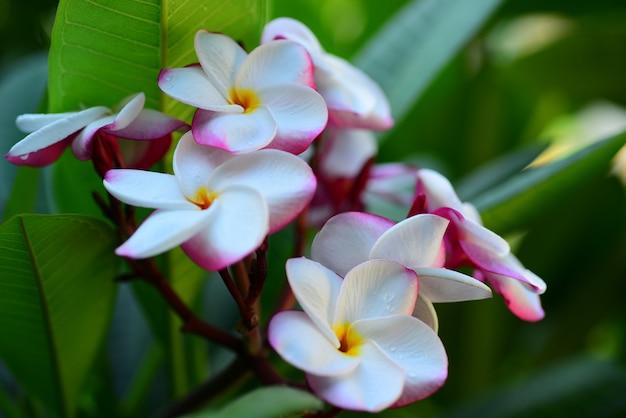 家の横にある庭の美しい花。美しい日光と緑の葉背景画像として使用されます。蝶や昆虫とカラフルな花。