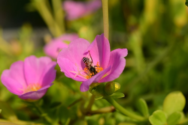 家の横にある庭の美しい花。