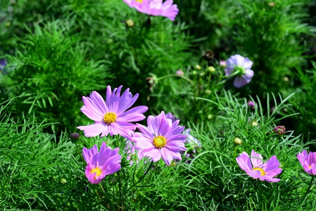Красивые цветы в саду цветут летом. ландшафтный формальный сад.