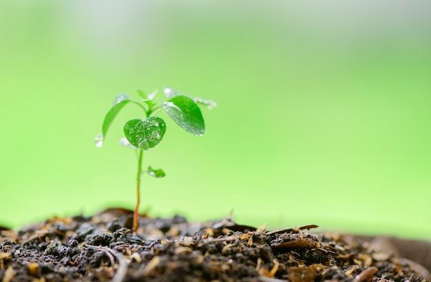 豊かな土から苗が成長しています