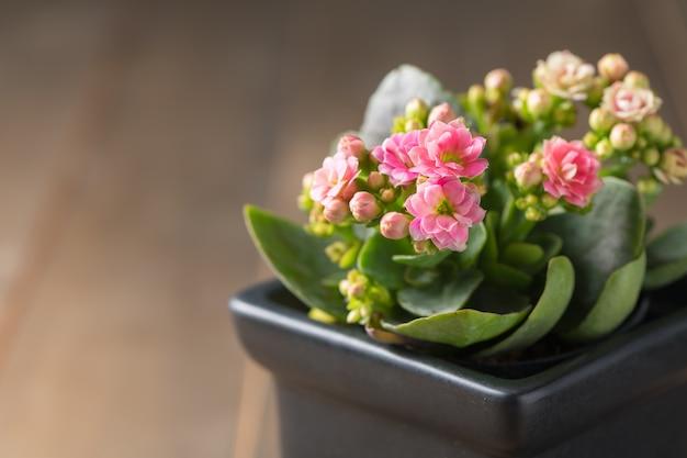 小さなポットと古い木の背景に美しいピンクのカランコイや炎のあるケイティの花