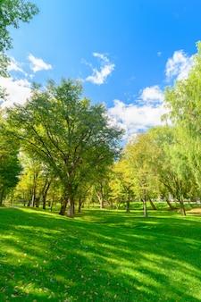 Большое дерево и зеленая трава и голубое небо