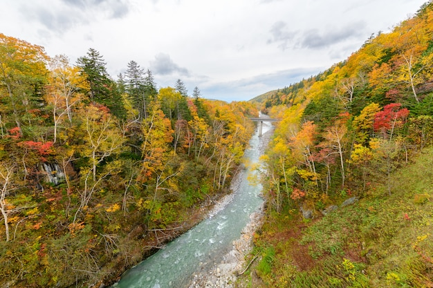白い滝の近くの秋のカラフルな木