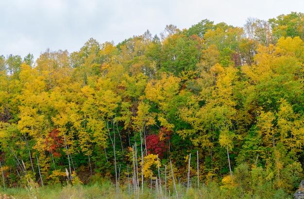 青い池の近くの山の上の秋の森