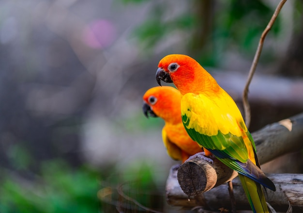 Красочная пара влюбленных попугаев на ветке.