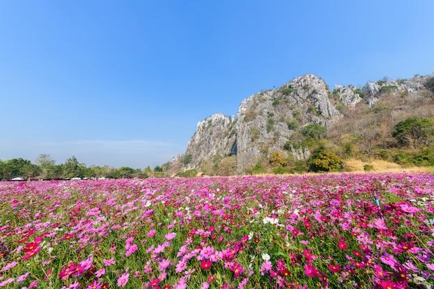 石灰岩の山々と美しいピンクのコスモス畑