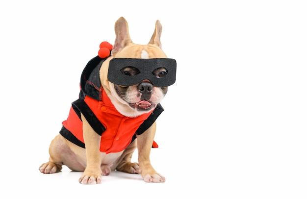 分離されたスーパーヒーローの衣装でかわいいフレンチブルドッグ