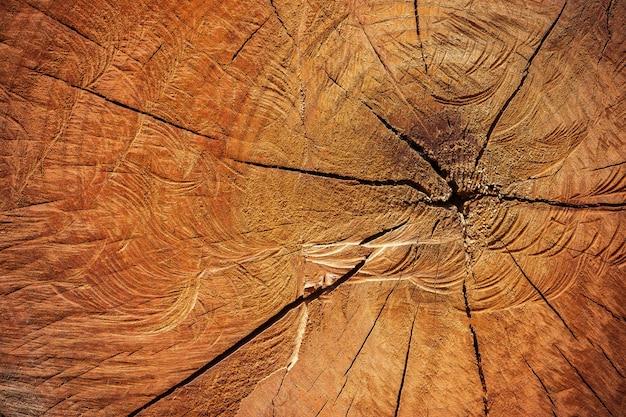 チェーンソーで伐採木材の質感を閉じます。地球温暖化と森林保全のコンセプトキャンペーン。
