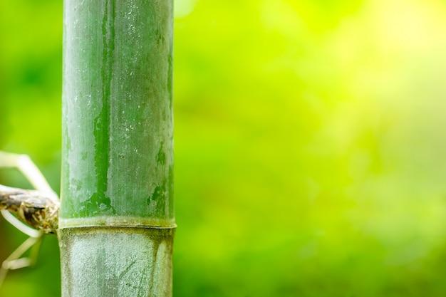 森の竹と朝の日差し。滑らかな緑の自然の背景。