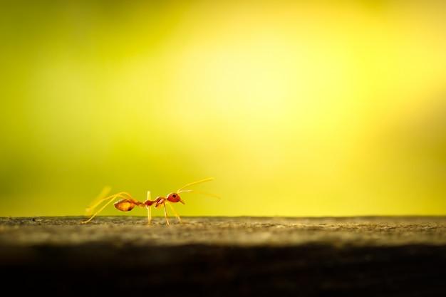木と緑の自然な背景の上を歩く赤アリ。