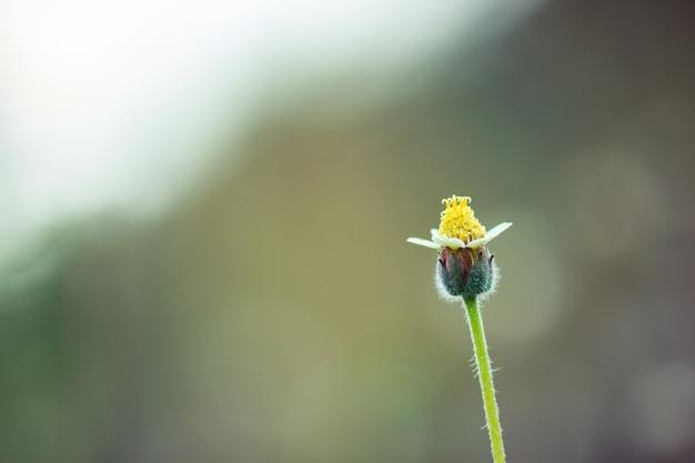 Цветок травы в зеленой естественной предпосылке на тропическом лесе. урожай естественный фон. крупным планом и копией пространства.